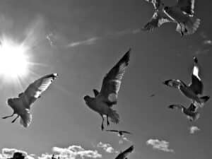 Shane Cashman: What's Wrong With the Birds?
