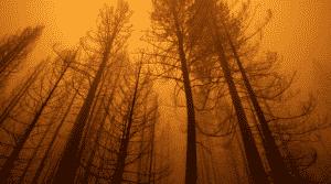 Former Professor Set Fires Near California's Ongoing Dixie Fire