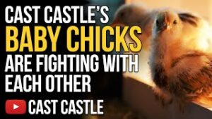 Cast Castle's Baby Chicks Are Fighting With Each Other