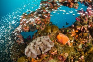 Great Barrier Reef Coverage Nears Record High